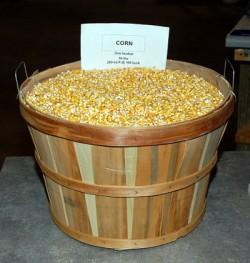 Бушель кукурузы